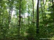 kletterwald05